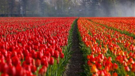 irrigation et developpement des plantes