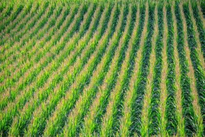 irrigation semenciers